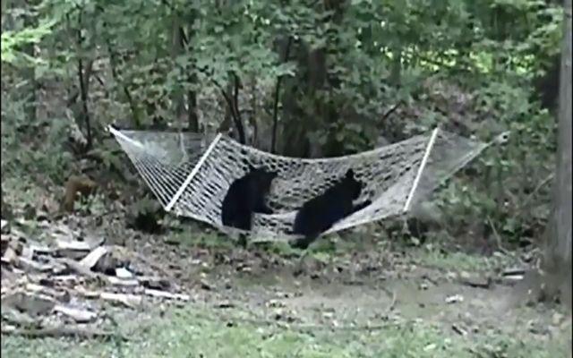 Забавные медведи (6.678 MB)