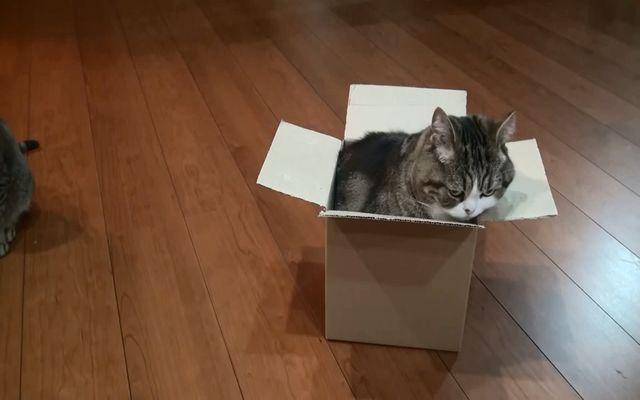 Позитивный кот и коробка (3.313 MB)