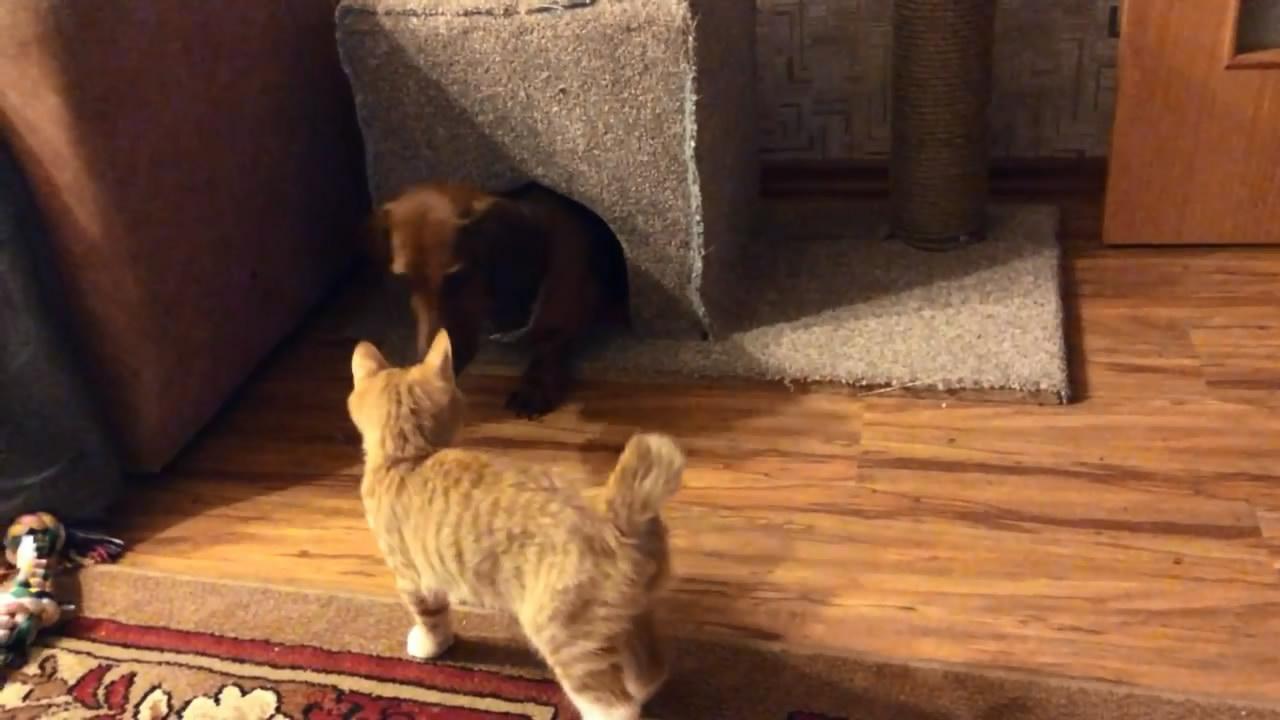Кот и пес дерутся за жилплощадь (16.684 MB)