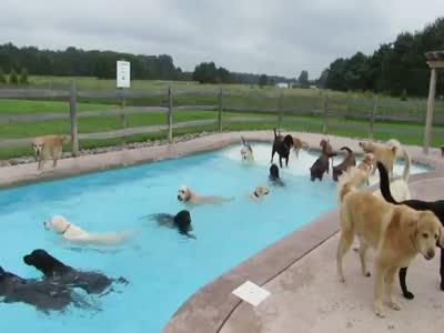 Собаки устроили вечеринку у бассейна (11.336 MB)