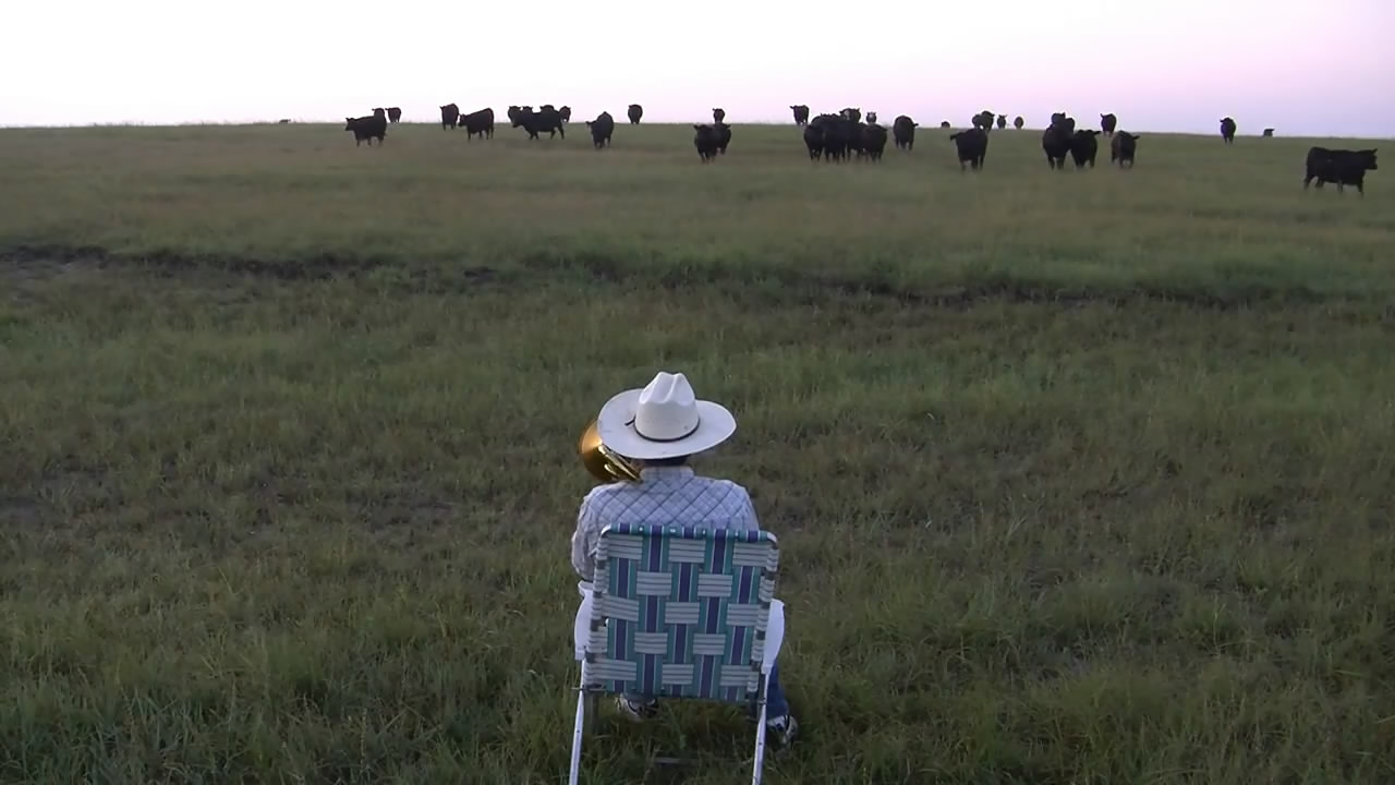 Коровы собрались на концерт (18.005 MB)