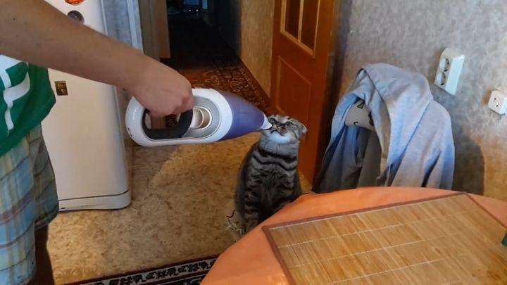 Кот не боится пылесоса (3.902 MB)