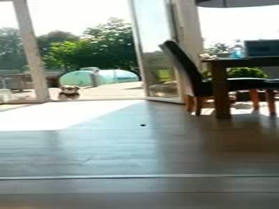 Собака думает, что дверь закрыта (5.622 MB)