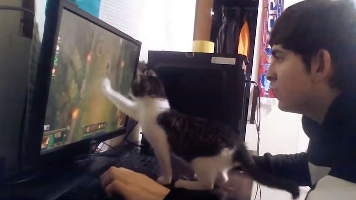 Котэ мешает играть за компьютером (8.421 MB)