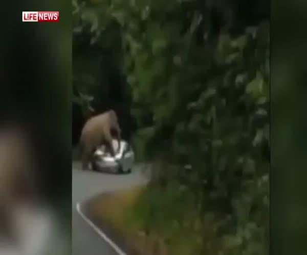 Злой слон против автомобиля (2.177 MB)