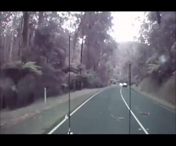 Жуткий сюрприз на дороге (3.458 MB)