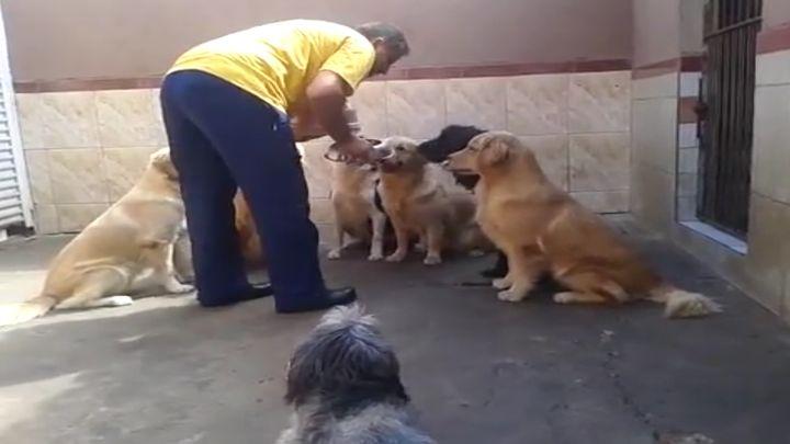Очень послушные собаки (3.734 MB)