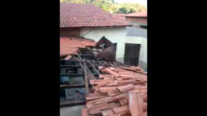 Лошадь забралась на крышу (5.463 MB)