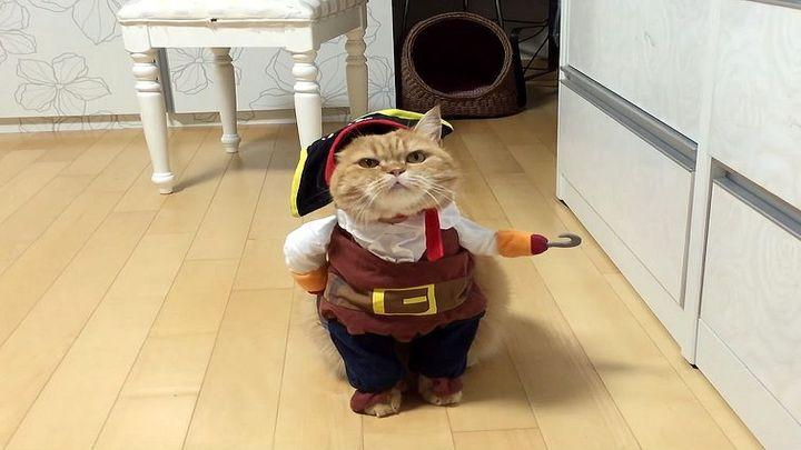 Забавный кот в костюме пирата (8.038 MB)
