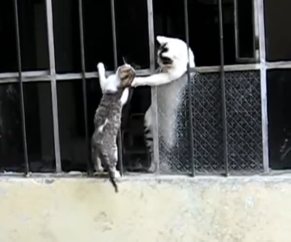 Кошка помогла своему котенку забраться в проем (1.887 MB)