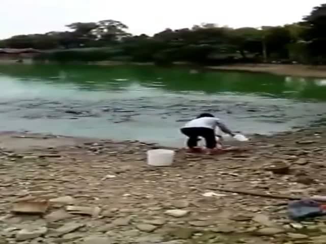 Рыбки выходят на берег, чтобы перекусить (13.821 MB)