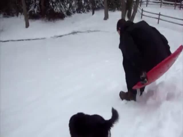Собаки радуются снегу (10.007 MB)