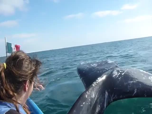 Чуть не получили китовым хвостом (2.732 MB)