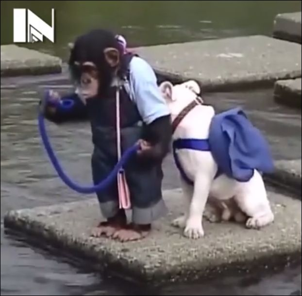 Обезьянка и щенок переходят реку (3.934 MB)