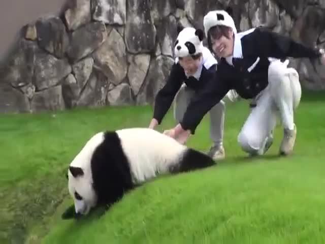 Милая неуклюжая панда (7.094 MB)