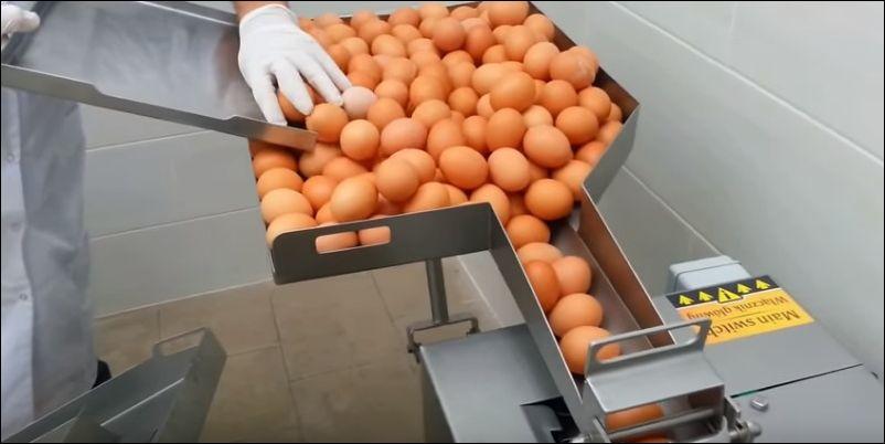 Аппарат, который отделяет белки яиц от желтков (13.997 MB)