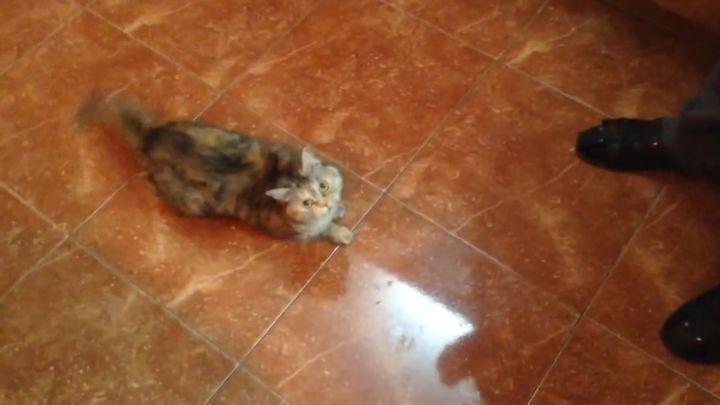 Реакция кота на оливки (8.039 MB)