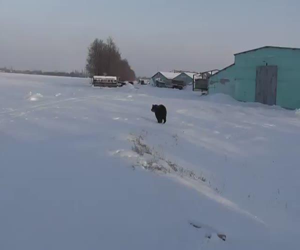 Забавный ручной медведь (11.409 MB)