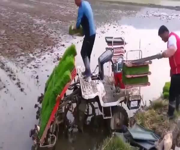 Китайцы высаживают рис по новой технологии (5.924 MB)
