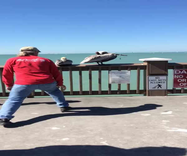 Мужик четко спас пеликана (18.620 MB)