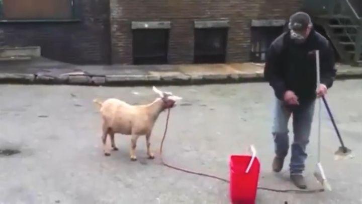 Музыкальный трек из блеяния козы (7.515 MB)