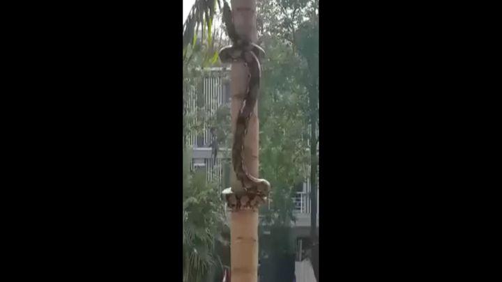 Змея ползет по дереву (2.097 MB)