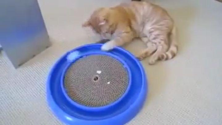 Игрушка-вынос мозга для кота (8.470 MB)
