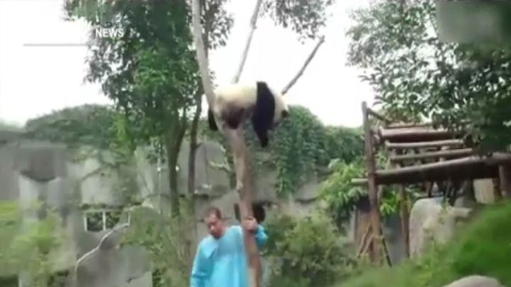 Снимаем панду с дерева (4.905 MB)