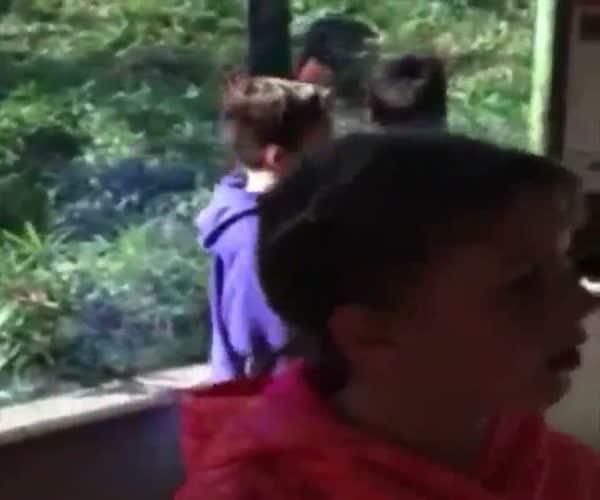 Шимпанзе пугает детей в зоопарке (6.138 MB)
