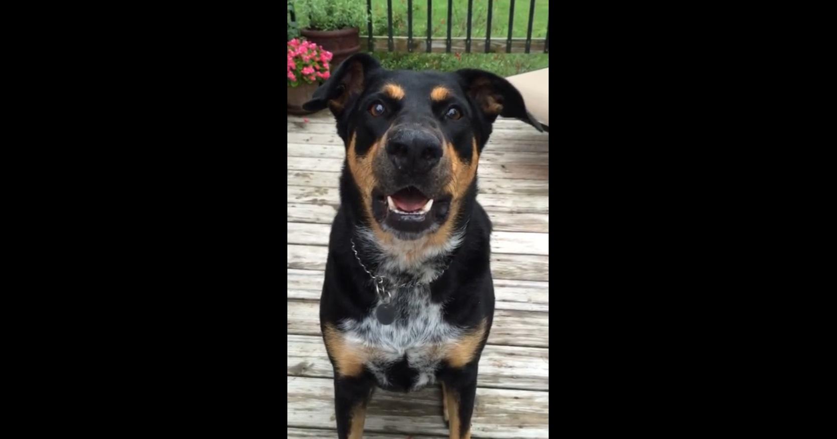 Собака умеет лаять шепотом (557.445 KB)