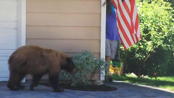 Медведь и человек испугались друг друга (1.367 MB)