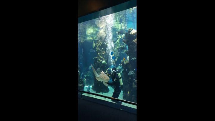 Акула кайфует от ласки (8.185 MB)