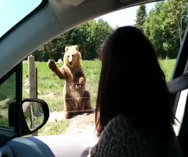Позитивный медведь (2.042 MB)
