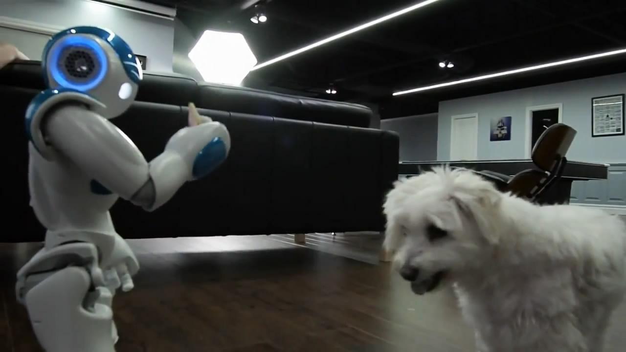 Робот кормит собаку (7.533 MB)