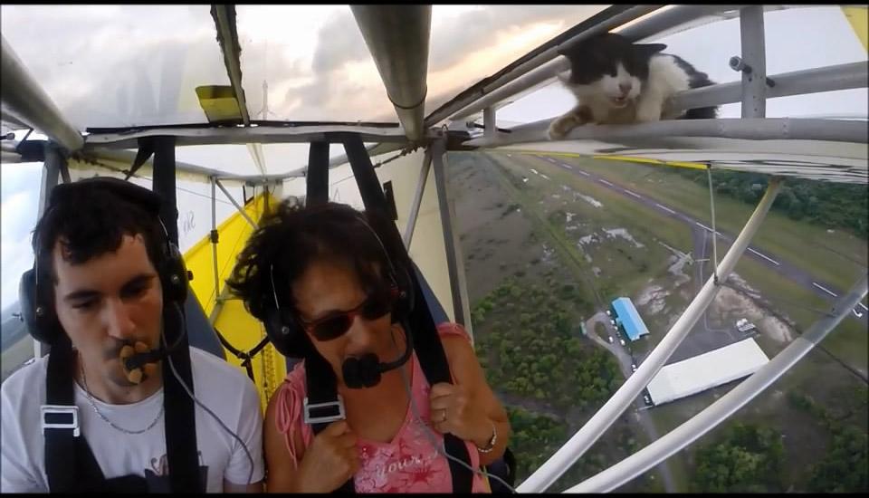 Глупый котэ залез в самолет (12.536 MB)