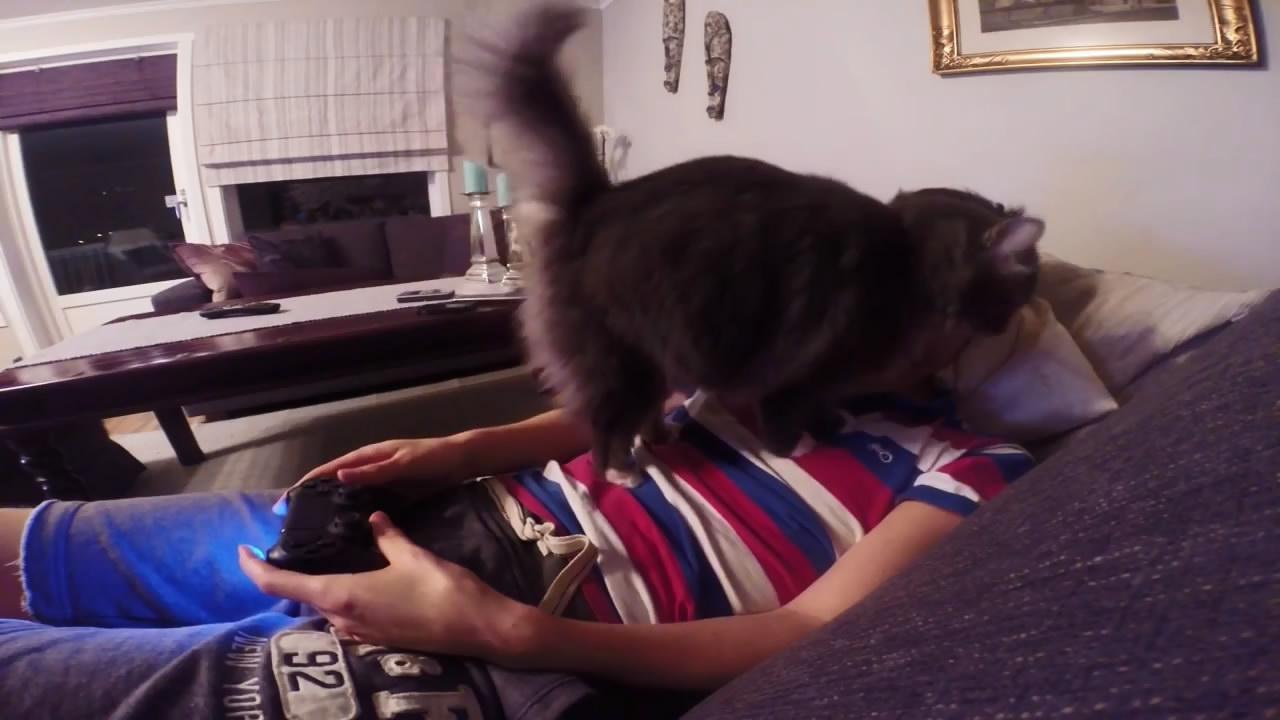Кот против видеоигр (6.933 MB)