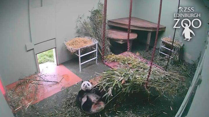 Пробуждение панды (11.610 MB)