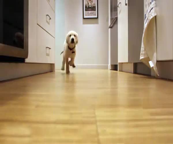 Собаки по-прежнему спешат на кухню (5.823 MB)