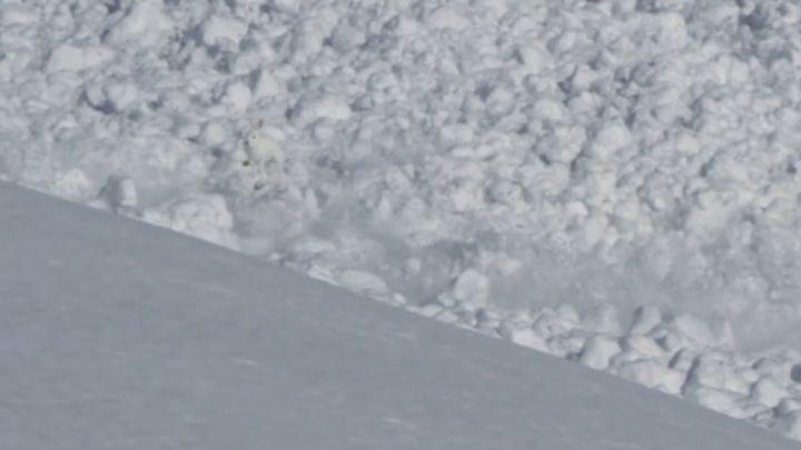 Заяц спасается от лавины (5.728 MB)