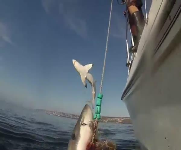 Акула мечтает о полете (1.235 MB)