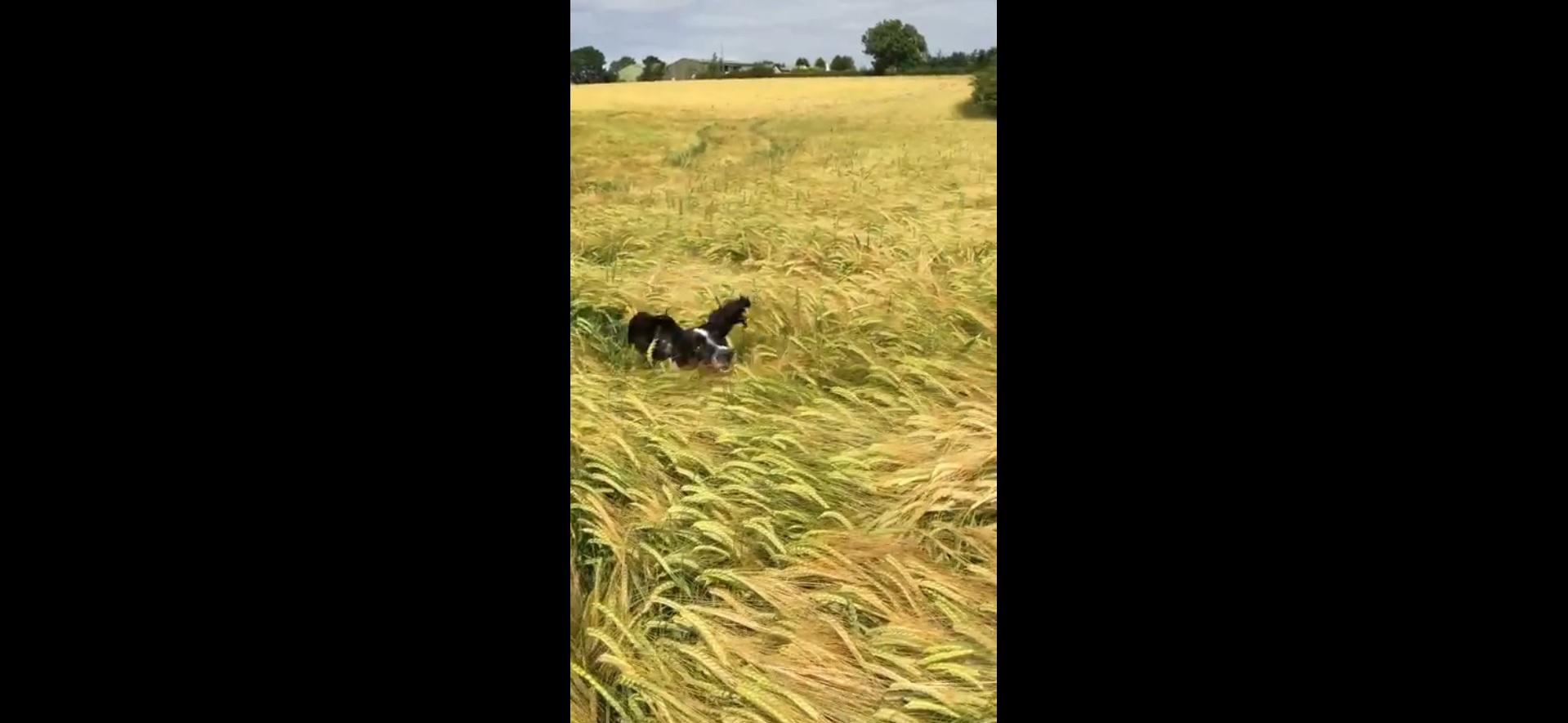 Собака проверяет где находится хозяин (3.361 MB)