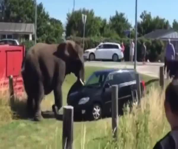 Слон атакует автомобиль (4.581 MB)