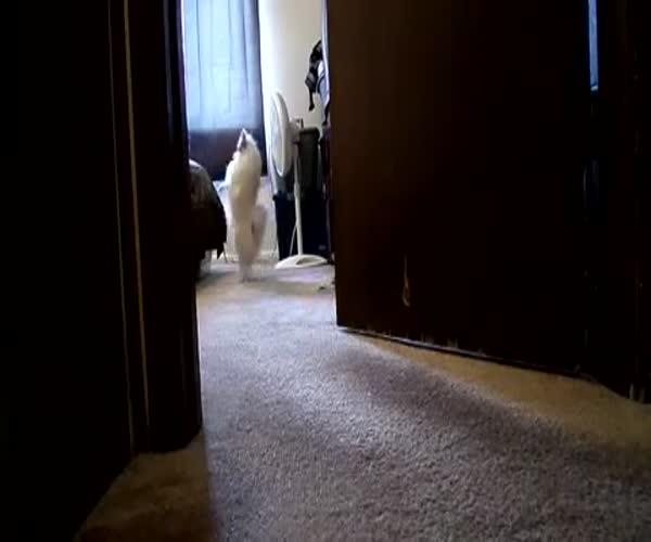 Собака ищет хозяина (652.094 KB)