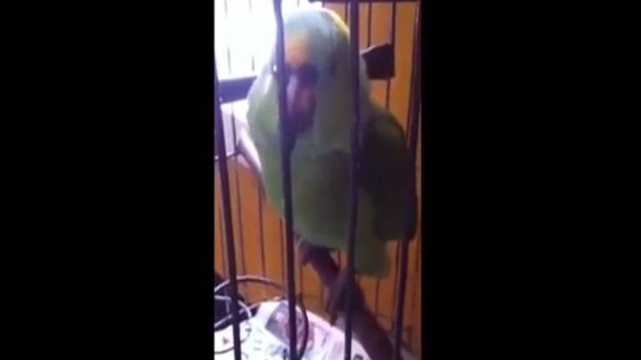 Попугай повторяет звуки малыша (4.808 MB)