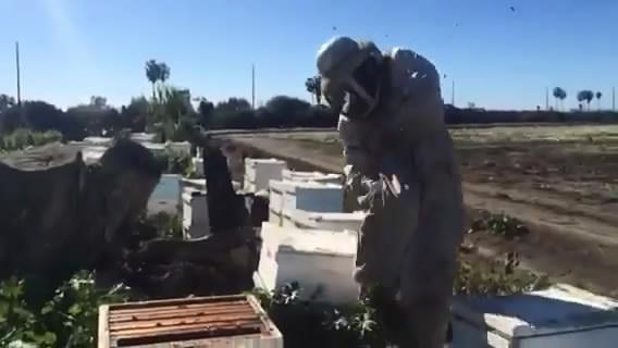 Когда пчелы не в настроении (3.892 MB)