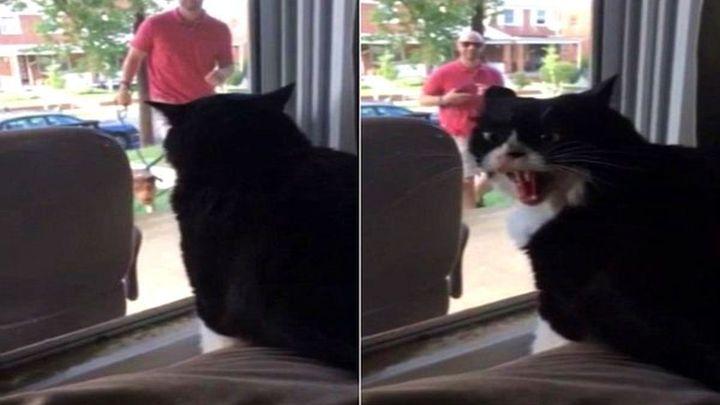 Кот увидел, что хозяин привел домой собаку (2.132 MB)
