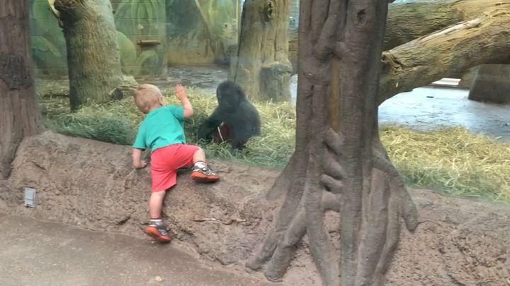 Малыш играет с детенышем гориллы (10.480 MB)