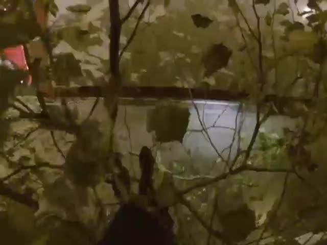 В Лондоне паренек прокатился на крыше двухэтажного автобуса