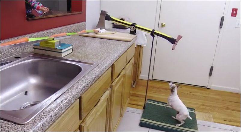 Пес помогает нашпиговать курицу овощами