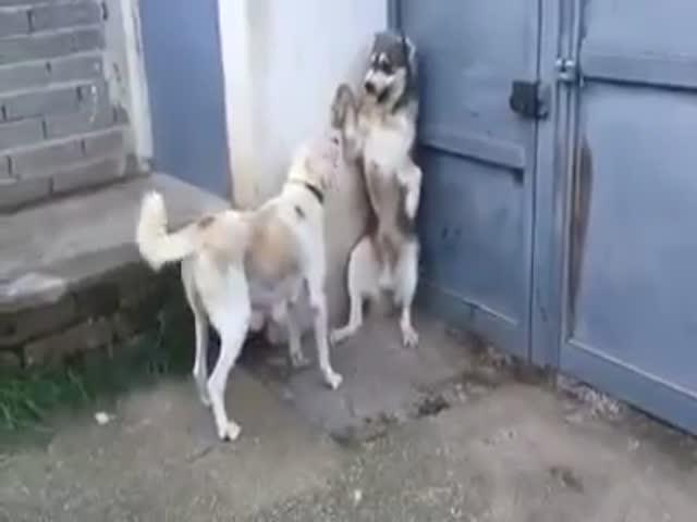 Не стоило рявкать на щенков